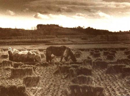 ひやま農場